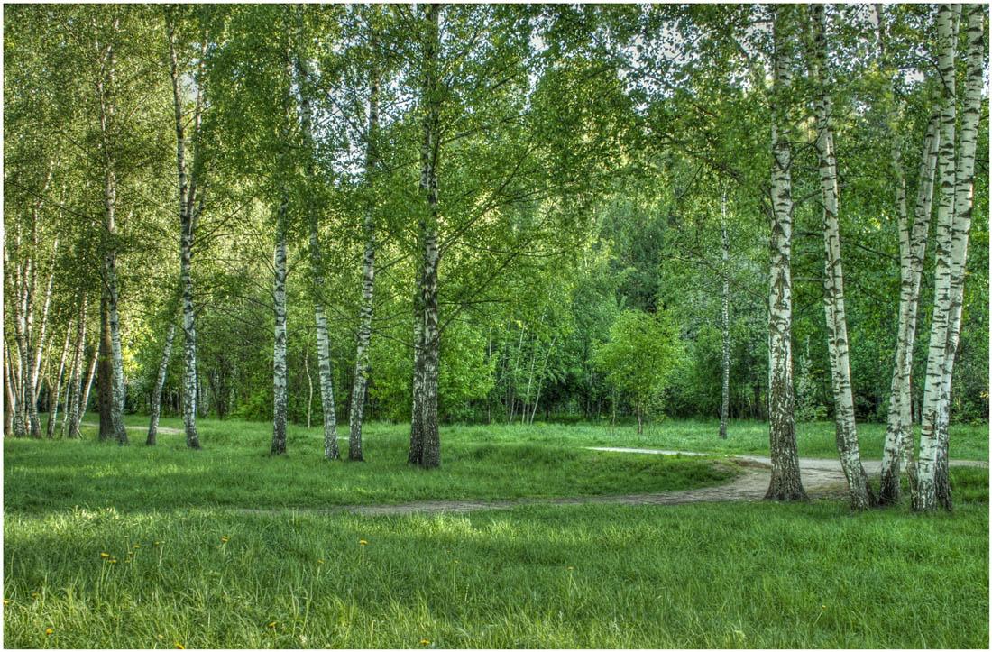 Фото природы летом красивые фотографии пейзажей летней