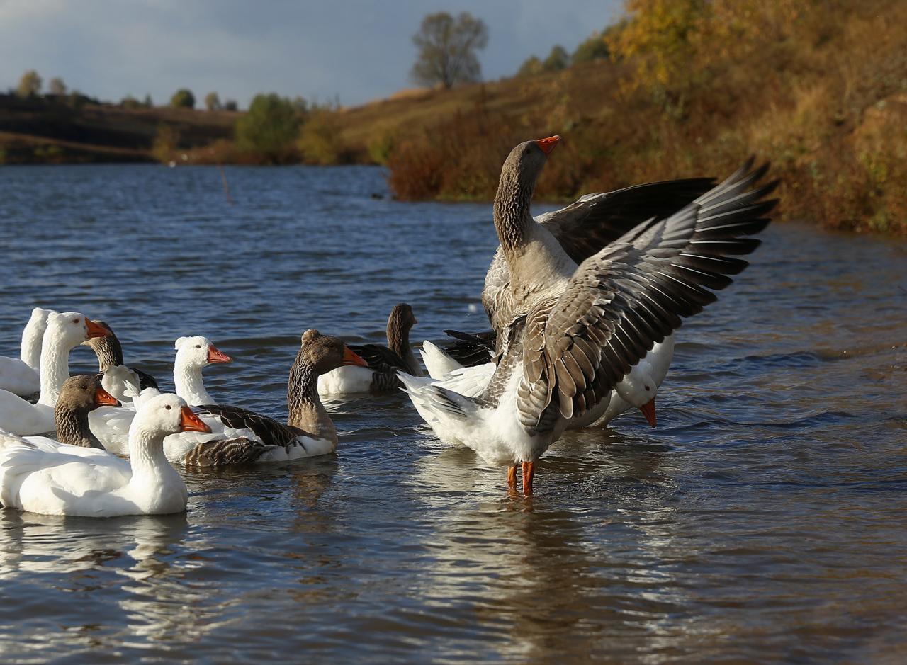 goose lake personals Search for your public page first name last name.