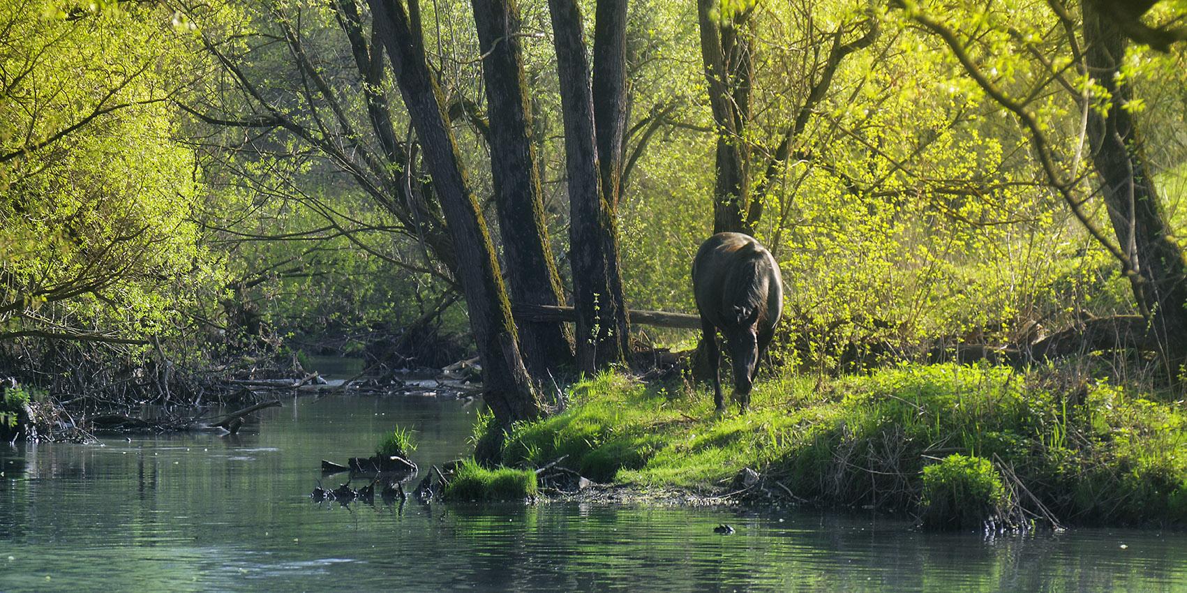 Фото-Тула. Александр Куликов. А на берегах этой реки пасутся...